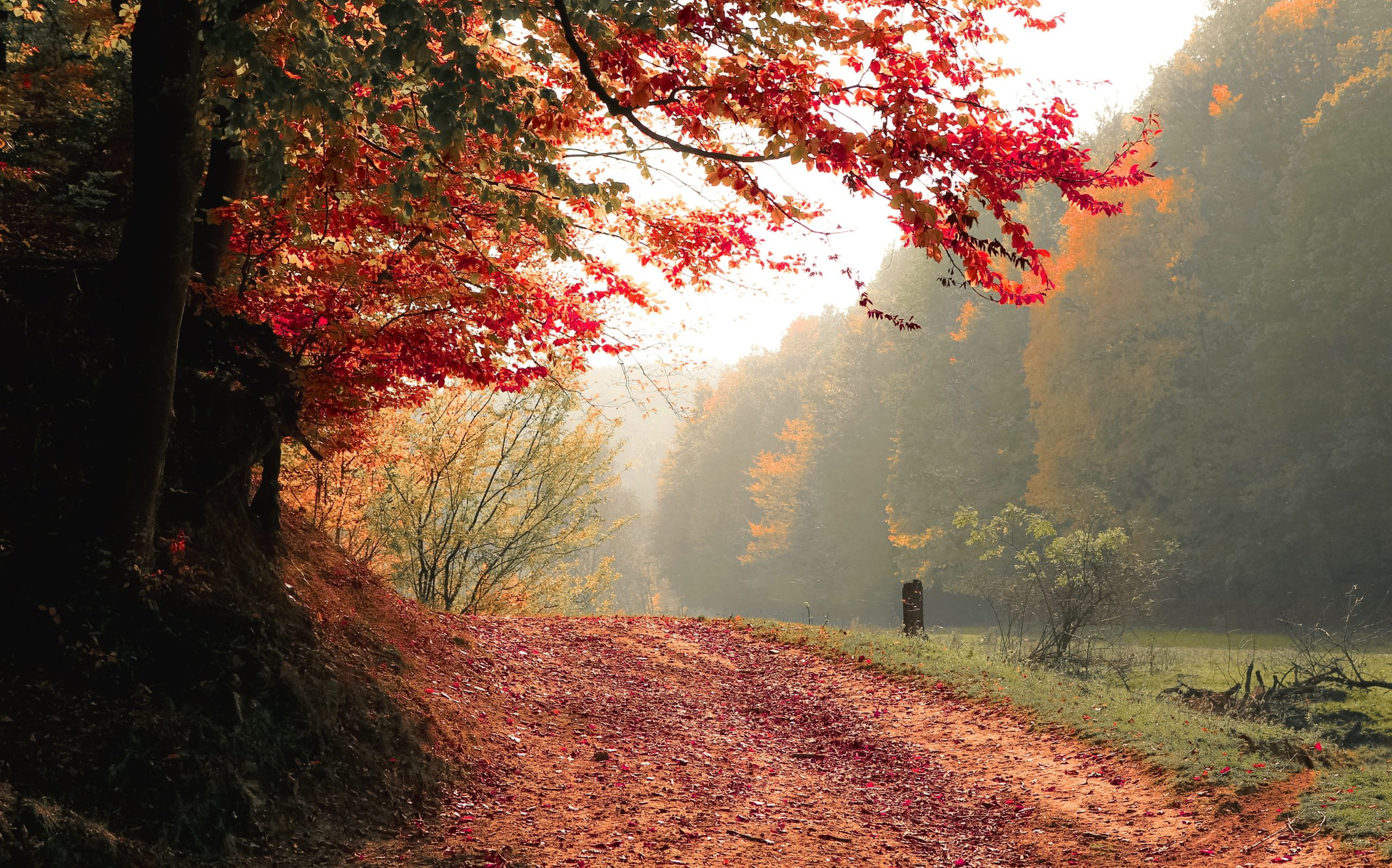 best-places-to watch-leaves-change-color